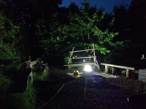 moth trap at night